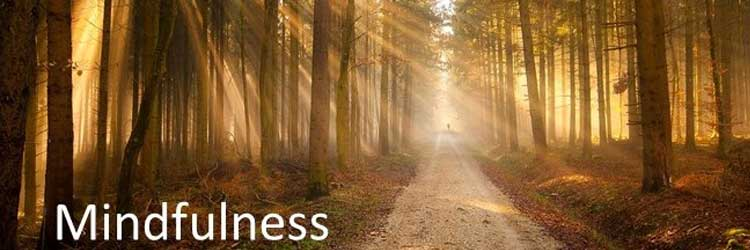 Mindfulness therapy for tinnitus